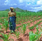 ICT4D in Agriculture